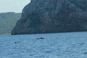 Delphine vor Cabrera