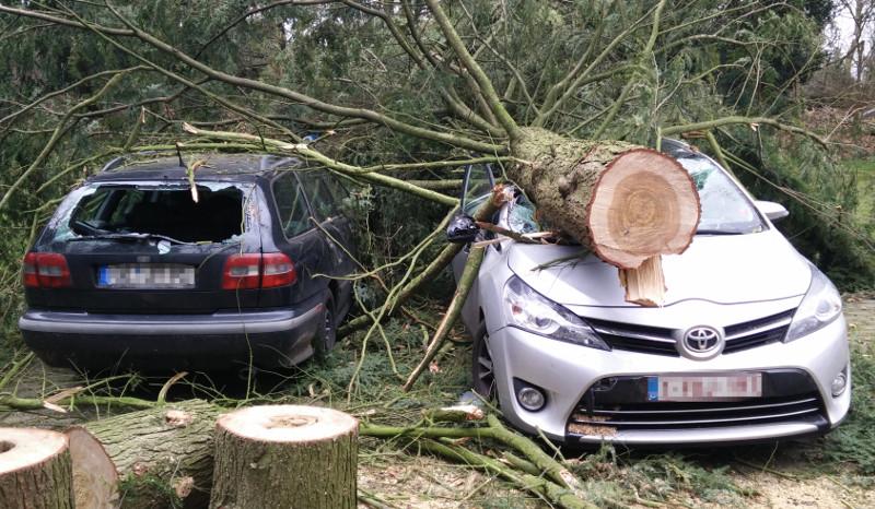 Ein durch einen Baum zerstörter PKW